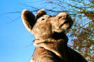 jovel-entertainment---kangoeroe